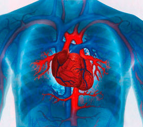 The effects of massage on cardiovascular system