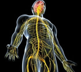 The effects of massage on the lymphatic system