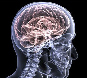 The effects of massage on the nervous system